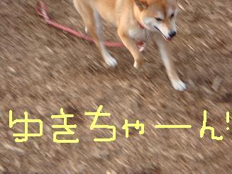 ゆきちゃーん!.JPG