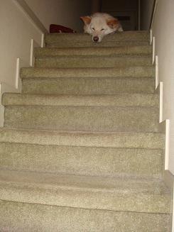 階段の上でZzz.JPG