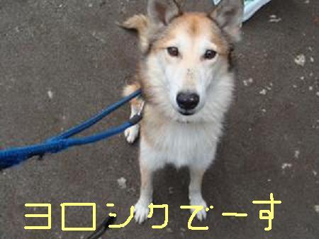 魔娑斗くん.JPG