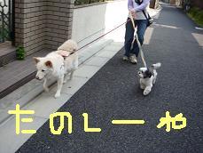 ゆきと最後のお散歩