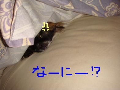なにか!?.JPG