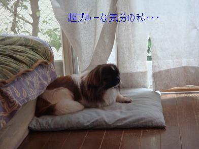 ブルーなまいちゃん.JPG