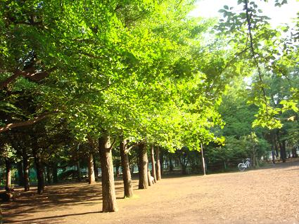 今朝の公園.JPG